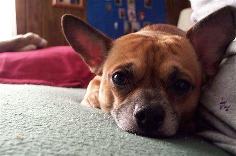 sad puppy love sad puppy by sad love on deviantart