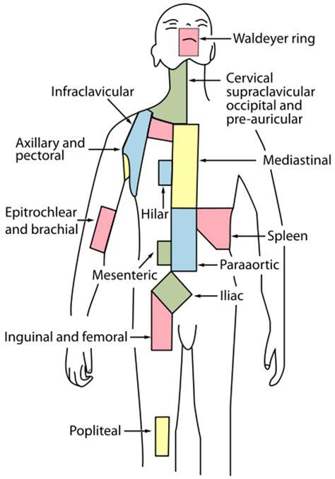 lymph node locations lymph nodes anatomy location quiz study