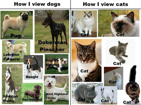 difference between and dogs the difference between cats and dogs memes quickmeme