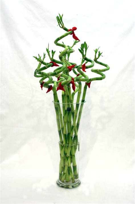 new year plant decorations cny flowers and plants traditional choices you must