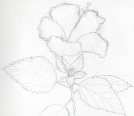 Outline Sketches Of Flowers by Hibiscus Flowers Drawing Tutorial