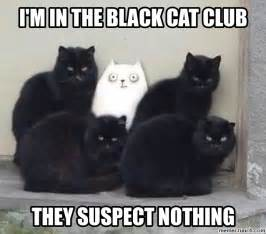 Black Cat Meme - i m in the black cat club