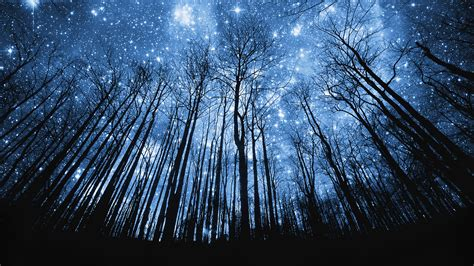 Tree Silhouette Against Starry Night Sky Harmonia | tree silhouette against starry night sky harmonia