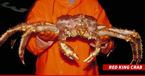 what type of crabs caught in deasdliest catch discovery s deadliest catch season news updates tmz com