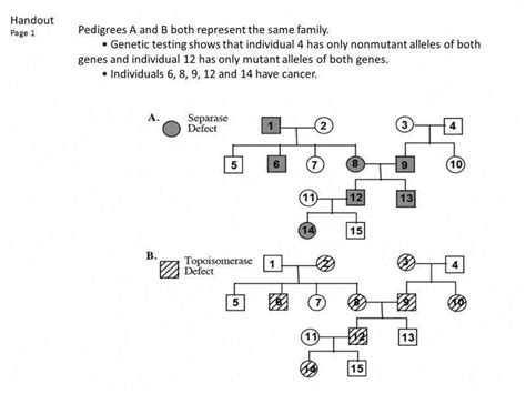Pedigree Analysis Worksheet Answer Key