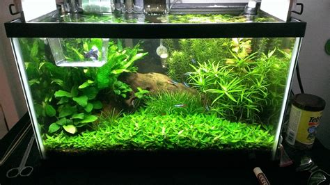 Aquascape Pool Design 10 Gallon Fish Tank Plants Planted 10 Gallon Betta Tank