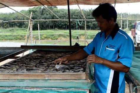 produk inovasi ikan keli kering menarikdicom