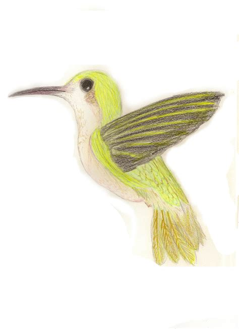 yellow hummingbird by kibawolf33 on deviantart
