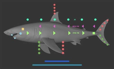cinema 4d character template fish custom character template for cinema 4d 3d model