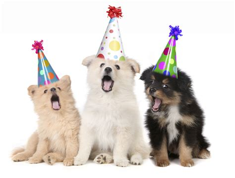 new year animal birthday 8 photos of pets to brighten your day pets world