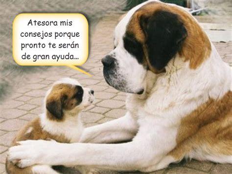 imagenes de buenos dias raza im 225 genes de perros bonitos con frases animales hoy