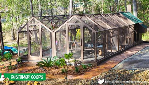 backyard chicken coops australia the mansion walk in chicken coop designed in australia