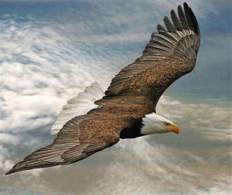 eagle tattoo kartal kartal d 214 vmesi eagle tattoo studio kırmızı tattoo shop