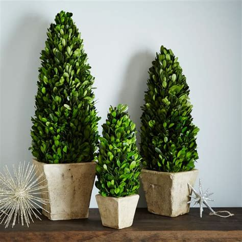 boxwood tabletop christmas tree boxwood trees west elm