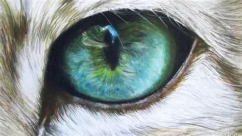 cat eye drawing cat eye by xxx ellie on deviantart