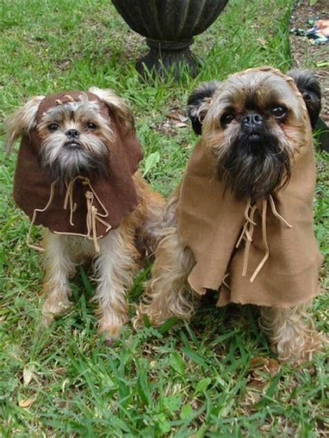 ewok puppy ewok puppies the poke