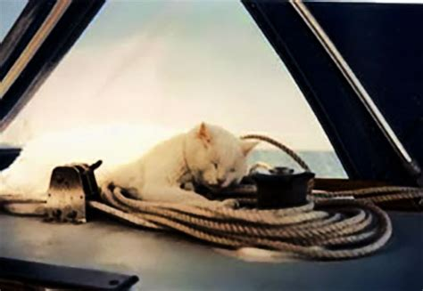 living on a boat faq liveaboard archives the essentials of living aboard a boat