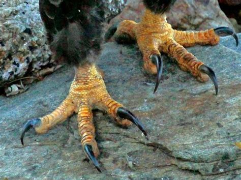 Foot Detox Eagles Landing by 17 Best Images About Eagles On The Eagles