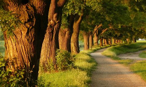 wallpaper alam hutan nature wallpaper hutan sienna goldenrod wallpaper