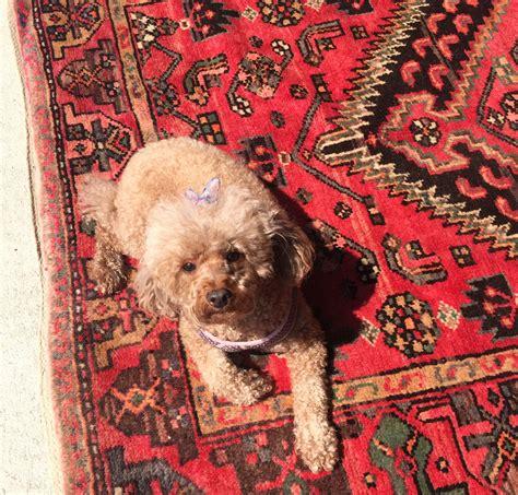 bedrosian rugs bedrosian rugs roselawnlutheran