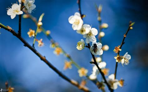 ricerca sui fiori ape sui fiori