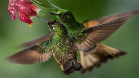 bring colour   desktop     hummingbird