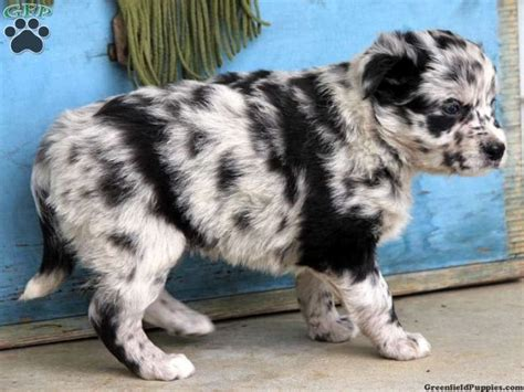 dalmatian mix puppies 25 best ideas about dalmatian mix on pit bull mix mix pitbull and great