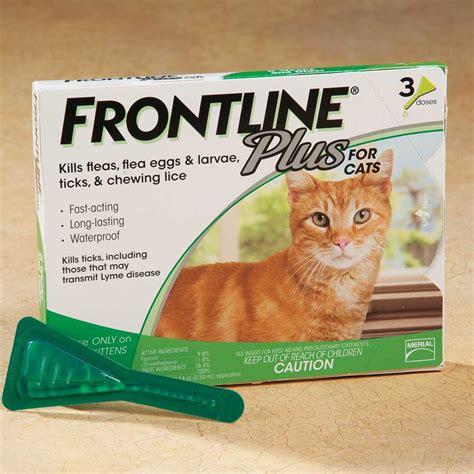Sho Kutu Buat Kucing cara menghilangkan kutu kucing dengan cepat dan sangat
