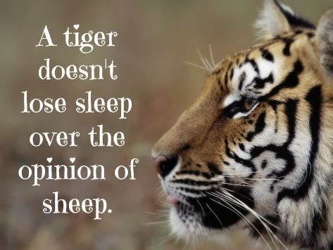 tiger quotes tiger quotes and sayings quotesgram