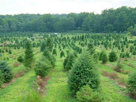 will tree farm facts about trees