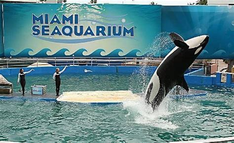 Federal Court Search Miami Activists Fighting To Free Tell Court That Feds Rubber St Seaquarium