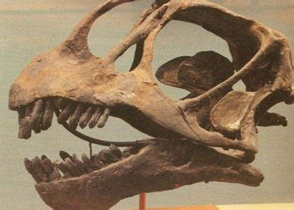 dinosaurs  fossils howstuffworks