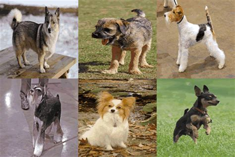 easy to house train dog breeds easiest to train small dogs list how to do it in 20 mins a day