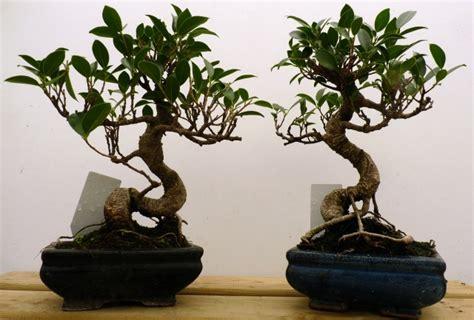 vasi per bonsai vendita vasi bonsai tutte le offerte cascare a fagiolo