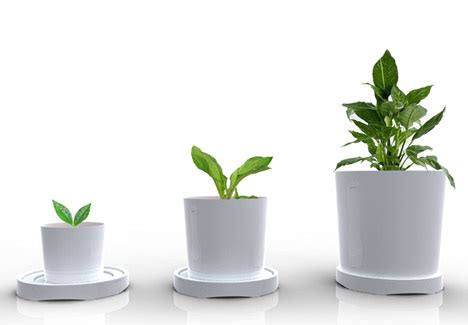 Ideas For Storage In Small Bathrooms by 3 Sizes In 1 Plastic Pot Grows Out As Your Plants Grow Up