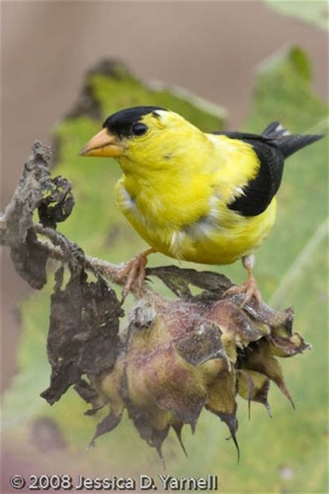 central florida birds outdoorsy pinterest