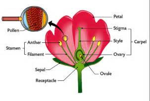 Galerry flower structure and reproduction coloring answer key