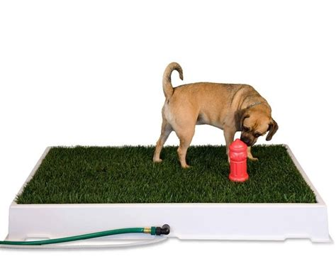 apartment potty potty grass litterbox for dogs