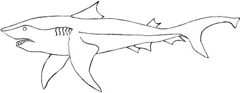 bull shark coloring download bull shark coloring