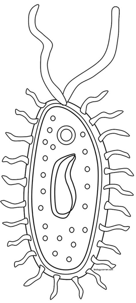 bacteria coloring pages murderthestout