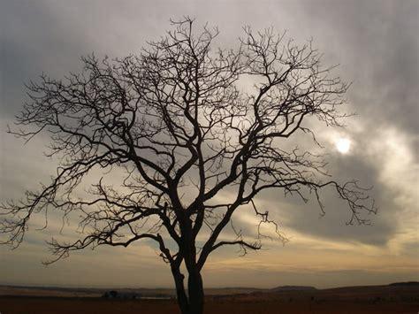 imagenes de tristeza o decepción frases de tristeza y dolor