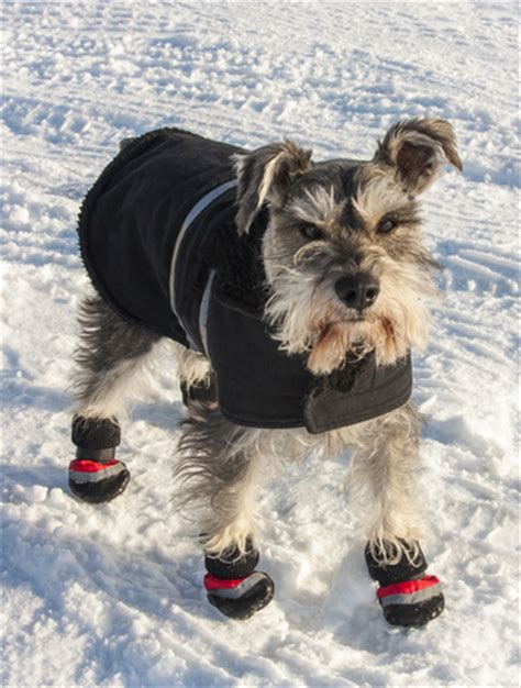 potty puppy in winter potty puppy in the winter puppy and