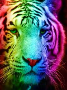 colorful tiger rainbow tiger 1 by tomboytigress on deviantart