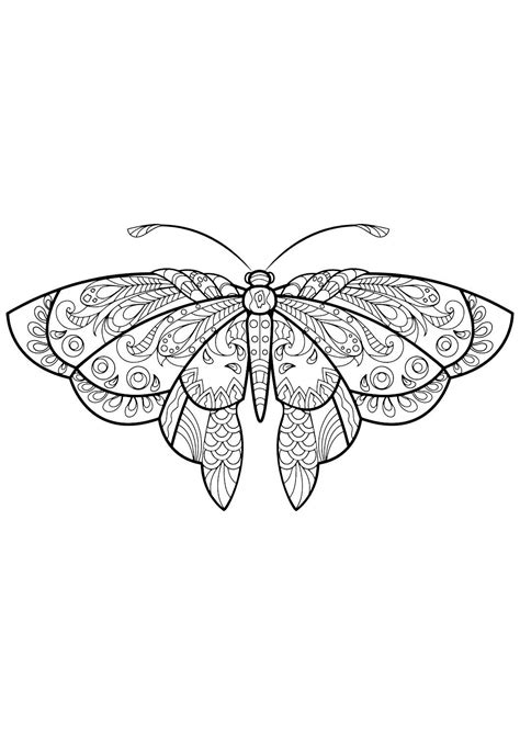 Adult Butterfly Coloring Book   Insect coloring pages