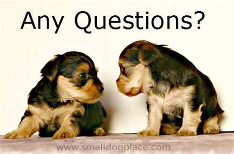 questions to ask a breeder what breeders ask you when puchasing a puppy