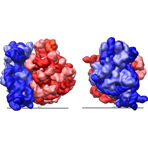 5 proteins made by ribosomes ribosome faq what are ribosomes made of what are