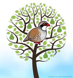 12 days of birdorable a partridge in a pear tree in
