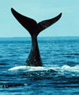 new england boat show coupons new england aquarium whale watch coupons
