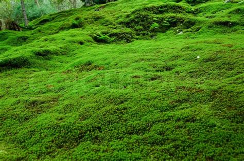 Beautiful Home Floor Plans Natural Carpet Of Moss Stock Photo Colourbox
