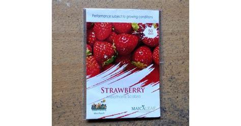Jual Bibit Stroberi Strawberry Seeds jual benih strawberry maicaleaf